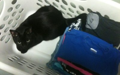 What's all this laundry in MY basket?!